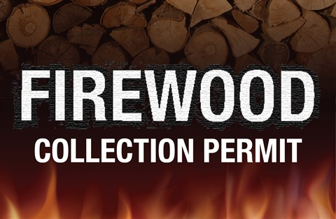 Firewood-collection-permit-web-tile.jpg