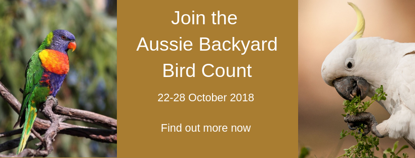 Aussie-Backyard-bird-count.png